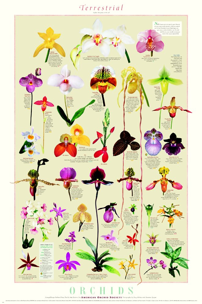Chart of different types of orchids. (LC)
